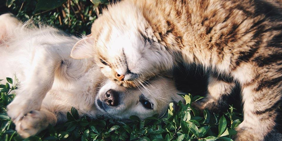 A puppy and a kitten on the grass